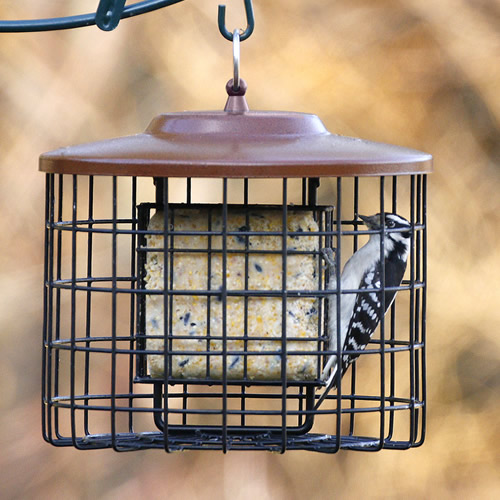 Squirrel Proof Double Suet Feeder, Brown