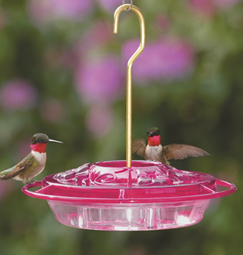 Little Fancy Fuchsia Feeder