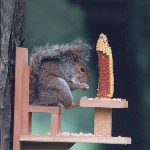 Duncraft.com: Duncraft 570 Squirrel Chair Feeder