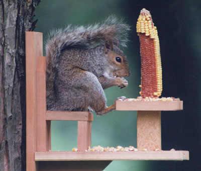 Duncraft Squirrel Chair Feeder