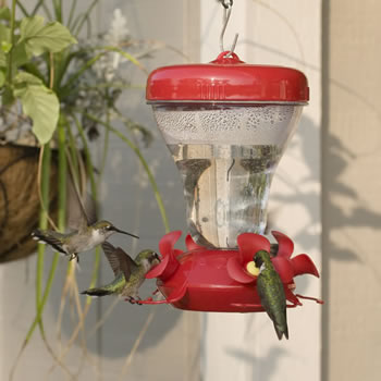 Magnolia Hummingbird Feeder