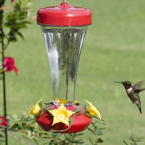 Aster Hummingbird Feeder