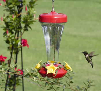 how to clean hummingbird feeder bee guards