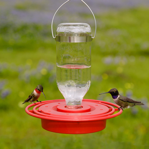 Best 1 Hummingbird Feeder 8 oz