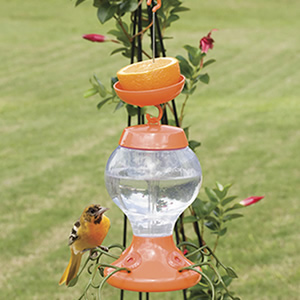Sundance Oriole Top Fill Feeder