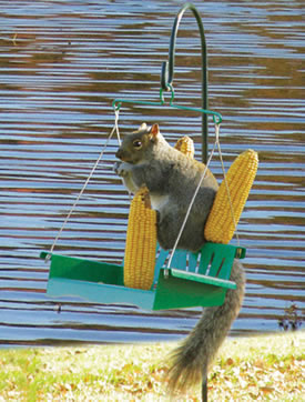 Squirrel Porch Swing