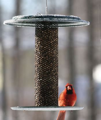 Safflower Magnet Feeder