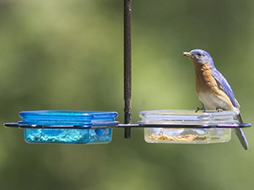 Double Hanging Snack Feeder