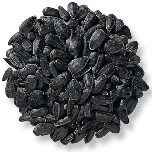 Duncraft Black Oil Sunflower Bird Seed