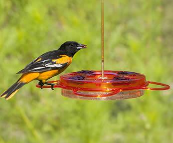 BirdsChoice Oriolefest Feeder