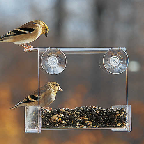 Duncraft Songbird Buffet Window Bird Feeder