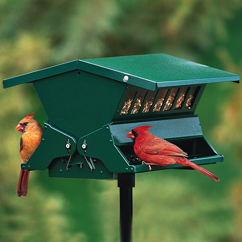 Absolute II Bird Feeder
