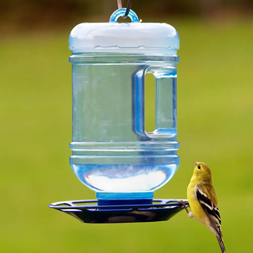 Water Cooler Bird Waterer