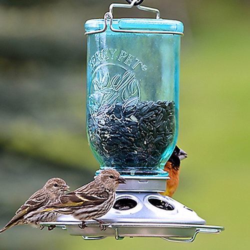 Mason Jar Wild Bird Feeder