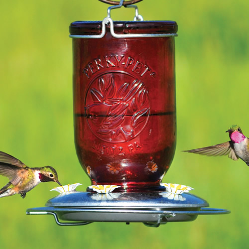 Red Mason Jar Hummingbird Feeder