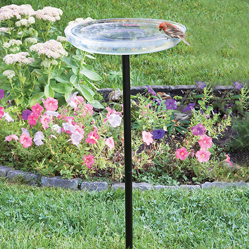 Clear Birdbath with Post