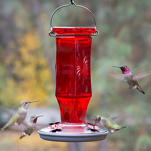 Vintage Ruby Starburst Hummingbird Feeder