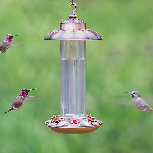 Ornate Copper Hummingbird Feeder