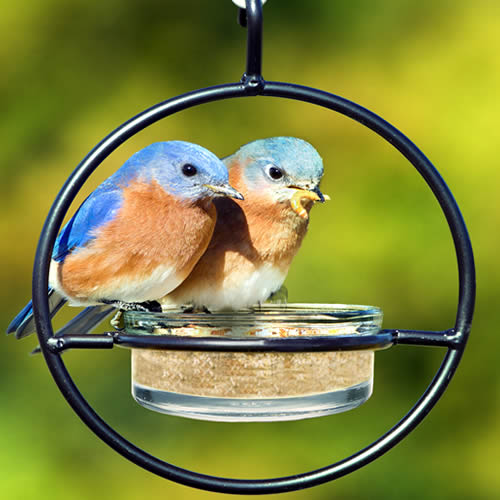 Bluebird Feeder Sphere