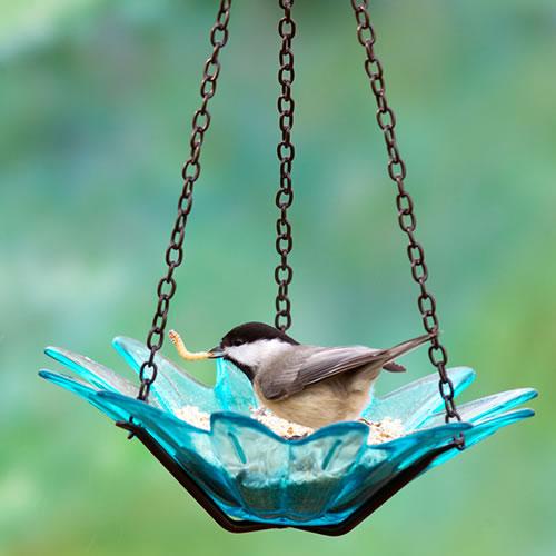 "8"" Recycled Glass & Metal Hanging Daisy Bird Feeder, Aqua"