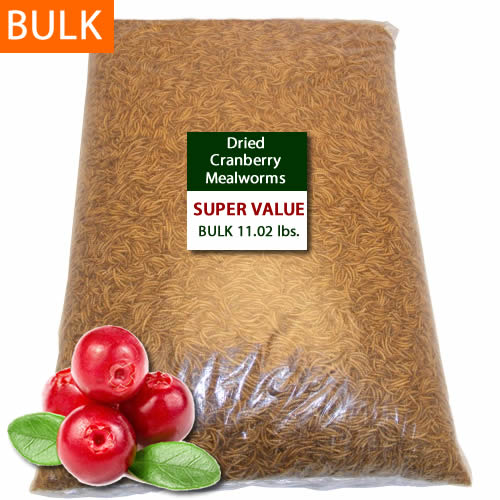 BULK Dried Cranberry Mealworms