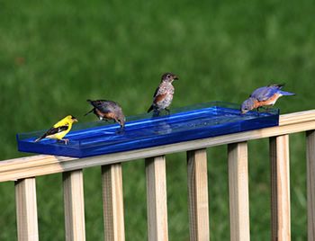 Bird Bath Tray