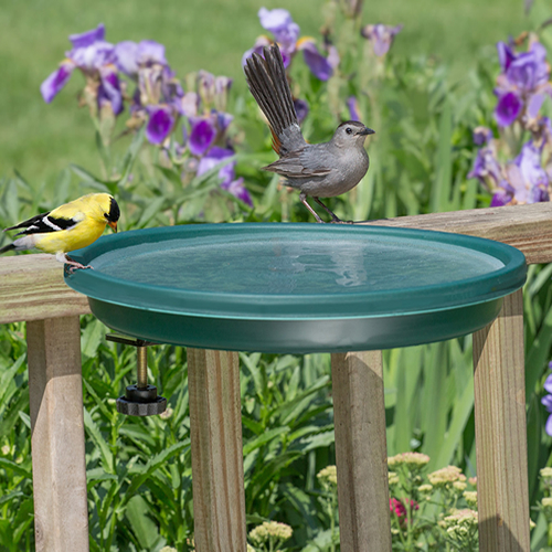 Clamp Mount Bird Bath, Green