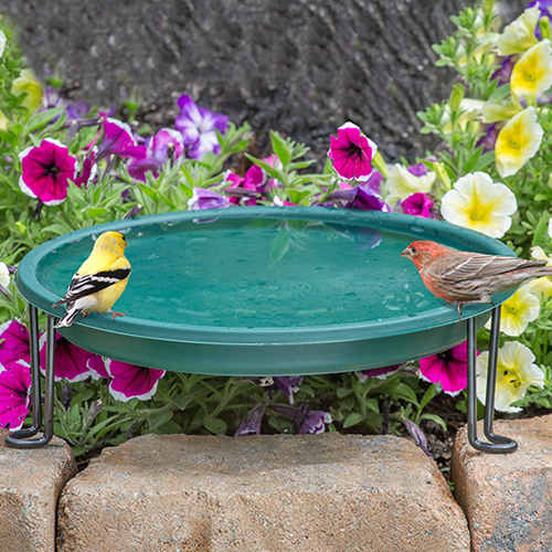 Ground Level Bird Bath, Green