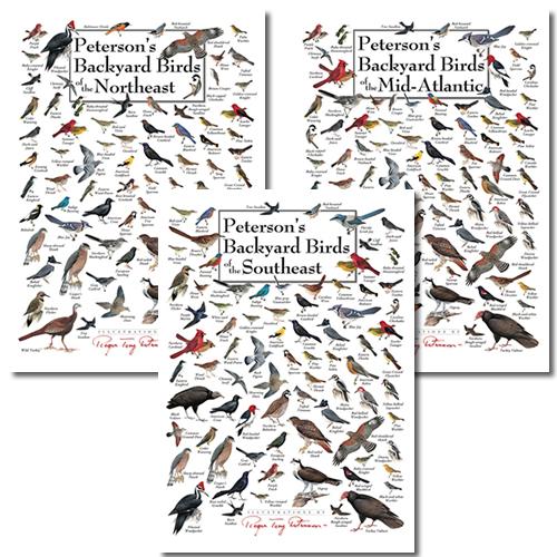 Duncraft.com: Peterson Backyard Birds Poster Greeting ...