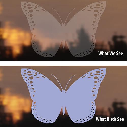Bird-Safe ® Butterfly Window Strike Decals