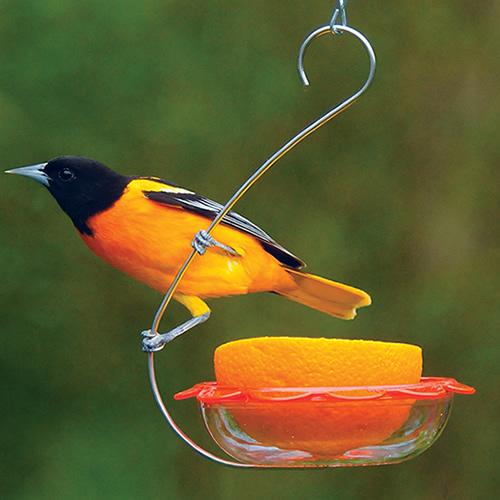 duncraft com  droll yankees bo u0026 39 s marmalade hanging oriole feeder