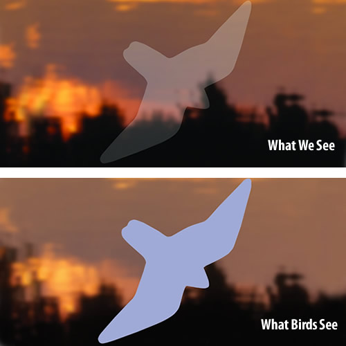 Bird-Safe ® Birds of Prey Window Strike Decals