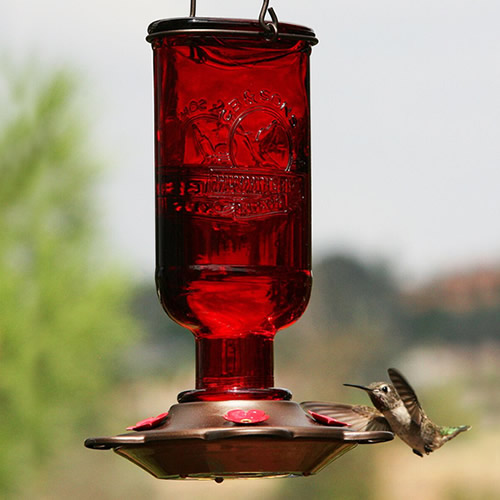 Hummingbird Elixir
