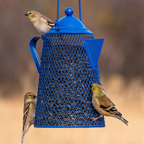 Mesh Coffeepot Sunflower Feeder