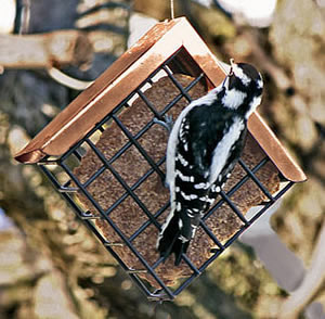 Copper Roof Suet Feeder