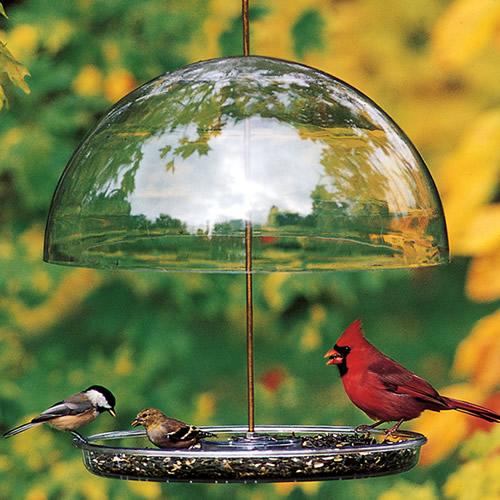 Dorothy's Cardinal Bird Feeder (DCF) photo