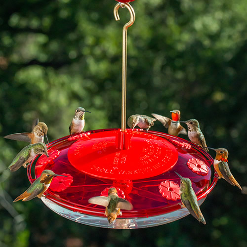 Droll Yankees Happy Eight Hummingbird Feeder