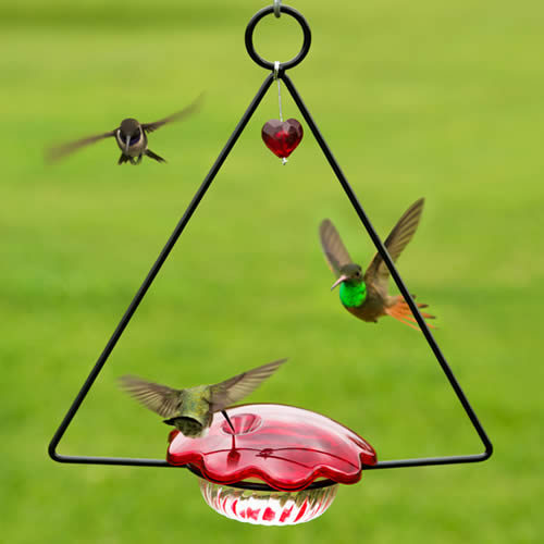 Hummingbird Swing Feeder