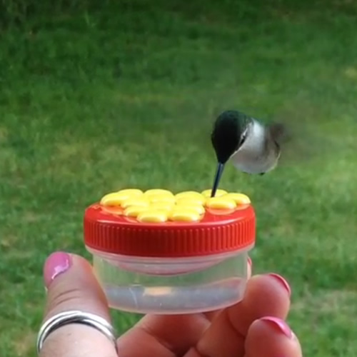 HUM Drum, Handheld Hummingbird Feeder