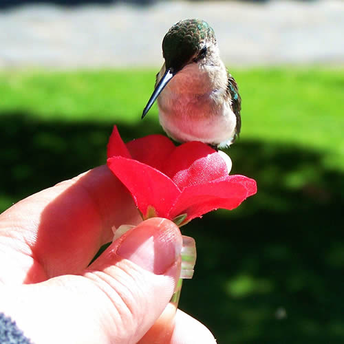 HUM-fi¢ €ž ¢ - Window to Hand Handheld Hummingbird Feeder