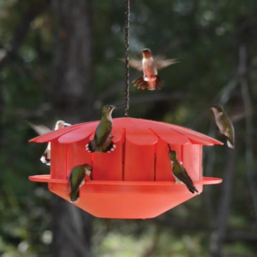 Humm-Bug Hummingbird Protein Feeder