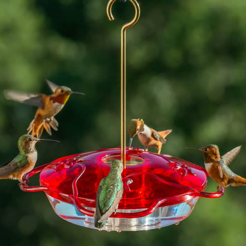Droll Yankees Little Flyer Hummingbird Feeder