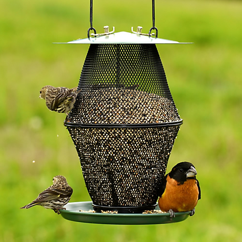 Mixed Seed Lantern No No Feeder