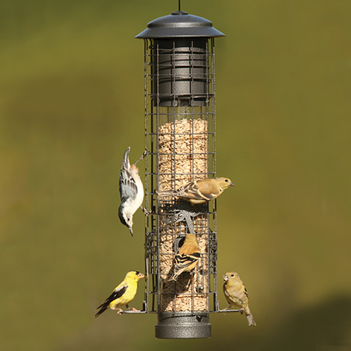 Dragonfly Squirrel Resistant Feeder