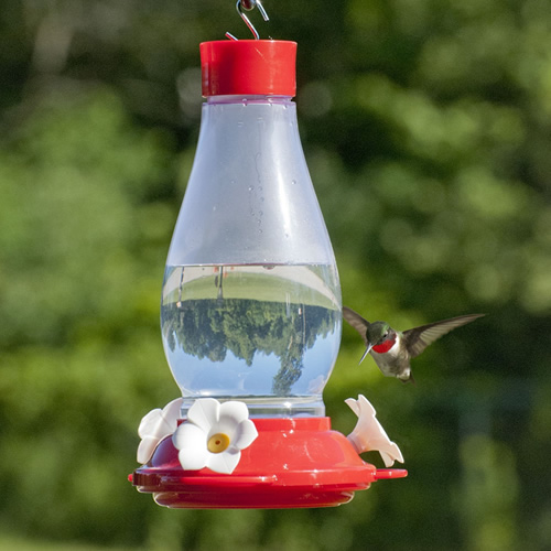 All in One Hummingbird Feeder