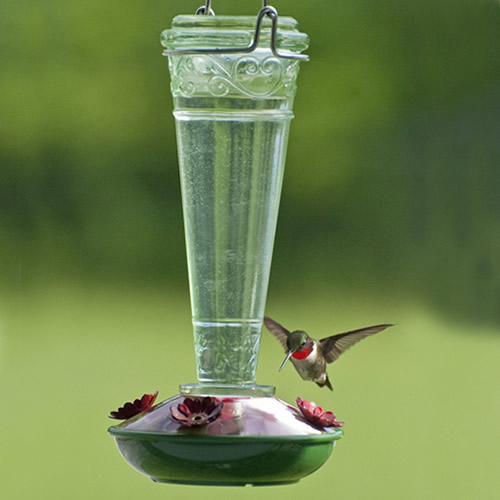 Bottle Glass Hummingbird Feeder