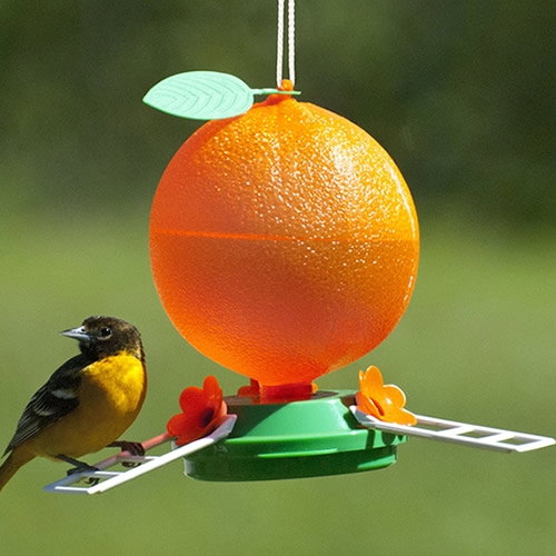 Orange Oriole Nectar Feeder