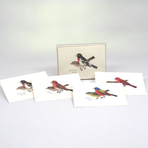 Peterson Bird Notecard Assortment 2