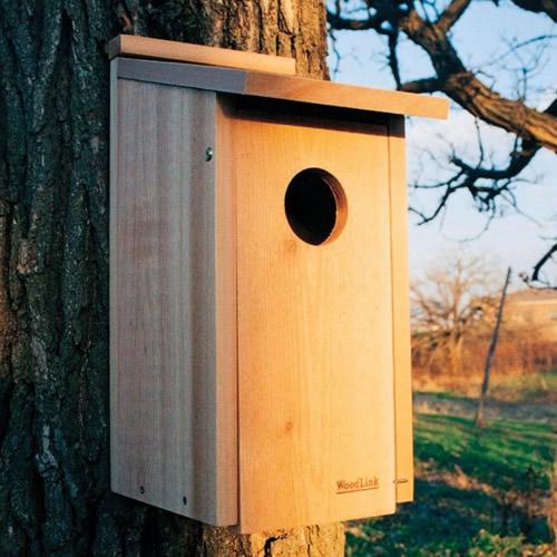 Screech Owl/Kestrel House