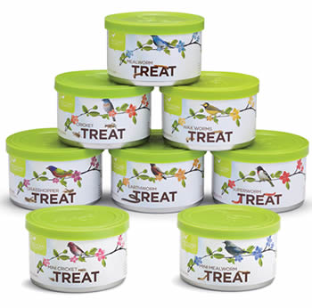 Mini Insect Treats Set of 7